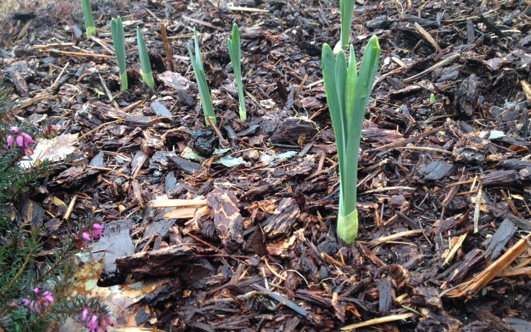 Spring – The Energy of Renewal